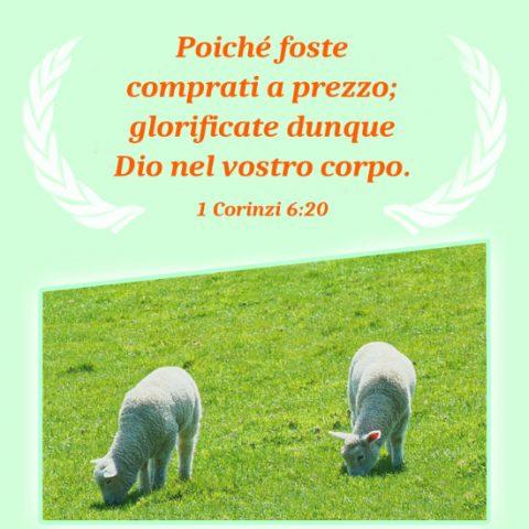 Due pecore pascolano