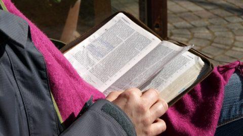 Possiedo una conoscenza pratica su come distinguere il grano dalle zizzanie delle profezie della Bibbia