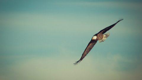 """Solo con la protezione di Dio possiamo """"volare liberamente"""""""