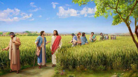 Il Figliuol dell'uomo è Signore del sabato