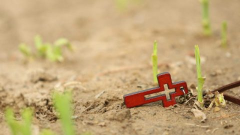 Croce e nuova vita