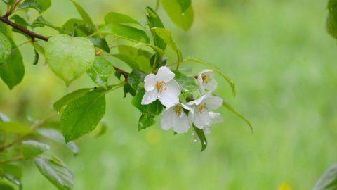 Fiori e foglie creati da Dio