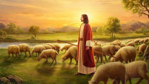 Le doti che un bravo pastore dovrebbe possedere