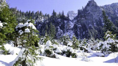 pino,neve,mantagna,cielo