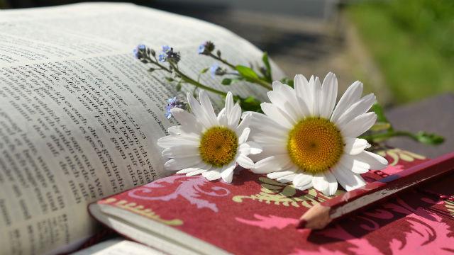 una bibbia sull'erba