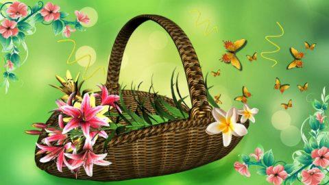 Farfalla e fiore Sopravvivere nelle leggi di Dio