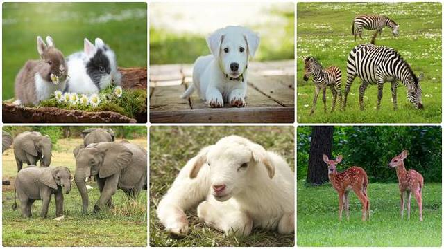 Animals created by God, sheep, elephants, dogs, rabbits
