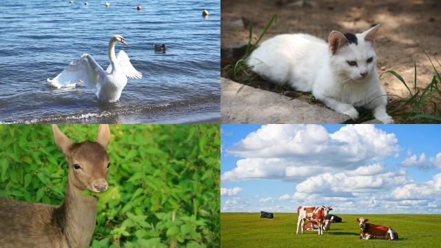 Dio traccia i confini per i vari uccelli, animali, pesci, insetti e per tutte le piante