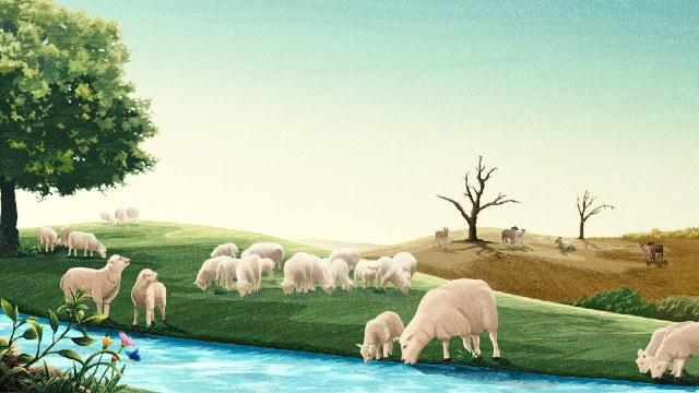Le pecore che hanno acqua da bere e quelle che non hanno